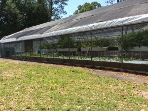 Commercial Aquaponic Farm