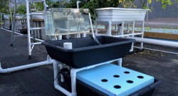 Aquaponics_full_system_kit